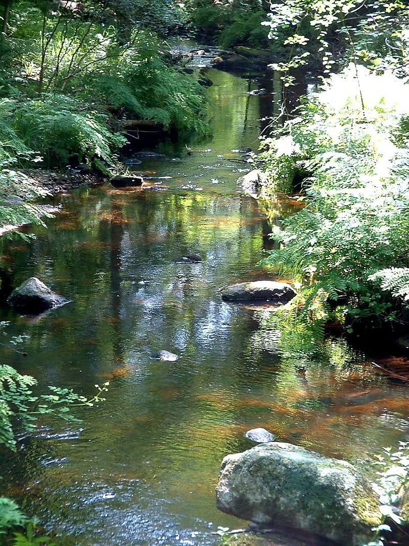 Spruce Brook