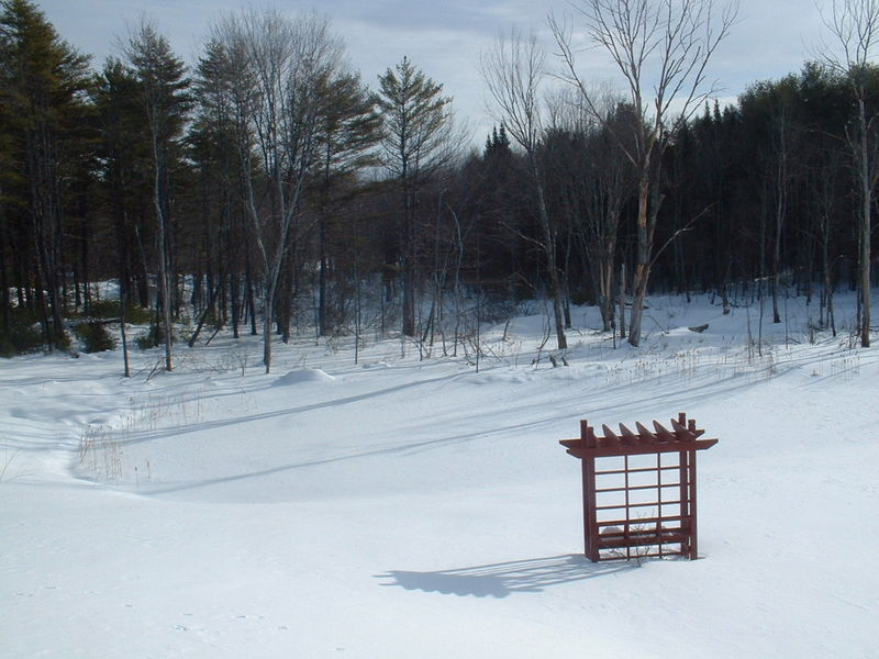February 6 pond view
