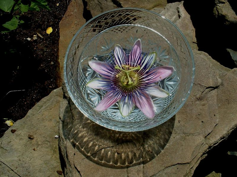 Passionflower bowl