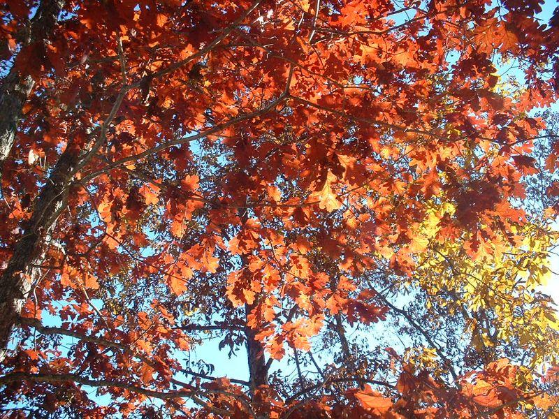 October Days 005