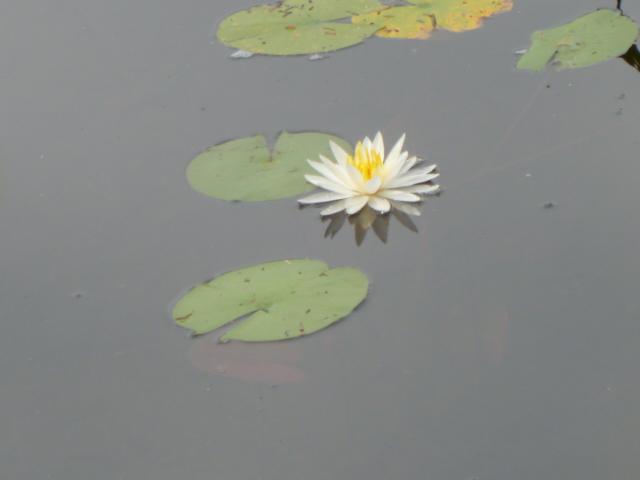 Stonehouse Pond 006