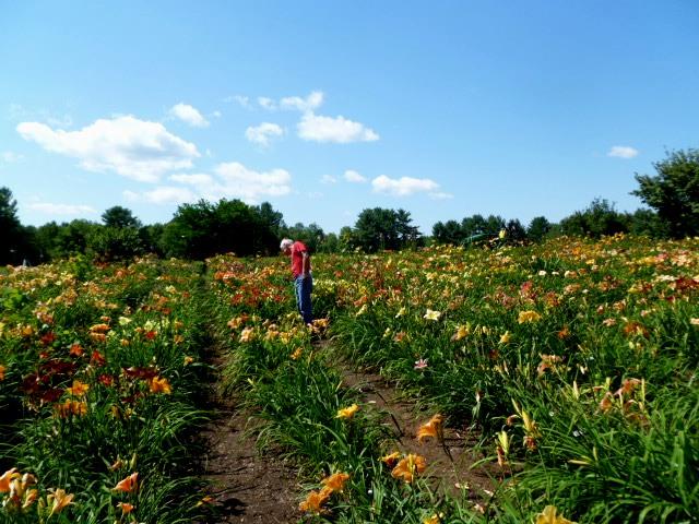 Daryl in a field of flowers