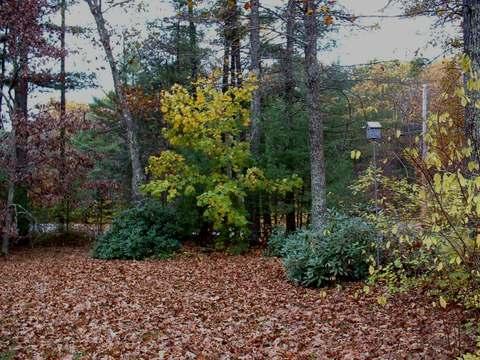 Leaf_smothered_yard