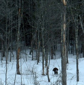Tom_in_the_woods_2