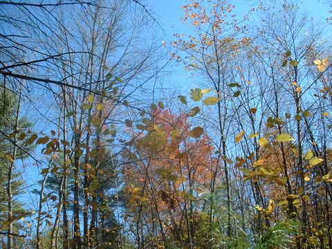 Autumn_forest_004