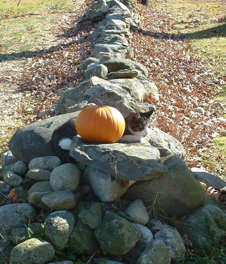 Chammy_pumpkin